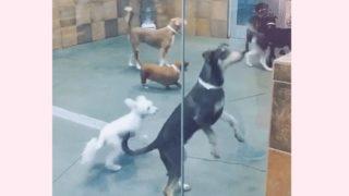 【海外の反応】「我が道を行くブルドッグ」犬に社会性は必要か?