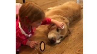【海外の反応】「未来のメークアップアーティスト」の練習台になる犬
