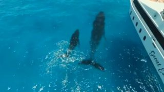 【海外の反応】シュノーケリングツアー中の観光客に近づくクジラの親子