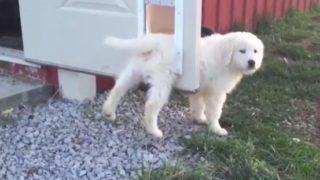 【海外の反応】冒険に出かけようとした子犬、玄関先で行く手を阻まれる