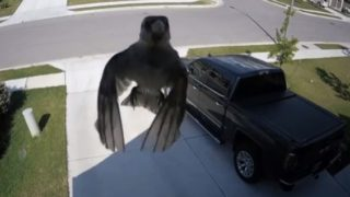 【海外の反応】監視カメラが捉えた「空中浮遊するスズメ?」