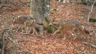 【海外の反応】「イタリアの森で、1本のブナの木を365日間無人撮影してみました」