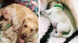 【海外の反応】「緑色の子犬」が産まれる