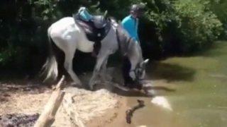 【海外の反応】川に驚いた馬、川に飛び込む!?