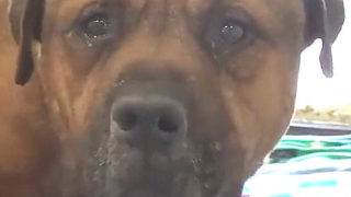 【海外の反応】『犬を捨てる前に思い出して欲しい犬』