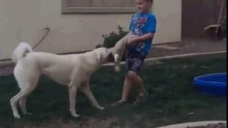 【海外の反応】「泣くな少年、犬の勝ちだ!」