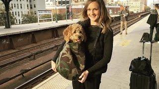 【海外の反応】ニューヨーク地下鉄「動物」事情