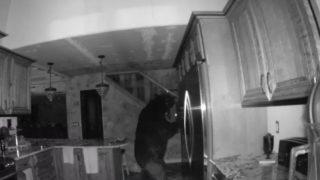 【海外の反応】監視カメラが捉えた、民家に侵入したクマの「最後の晩餐」