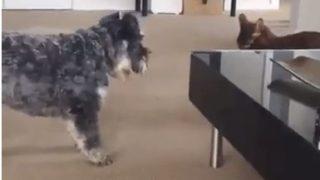 【海外の反応】まるでクロヒョウのような迫力で犬を威圧する猫