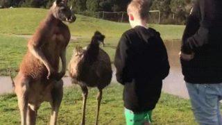 【海外の反応】少年の胸に刻まれたオーストラリアの「ワイルドな思い出」