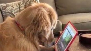 【海外の反応】犬や猫を夢中にさせる「マタタビ動画」とは?