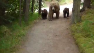 【海外の反応】「クマとハイキング」グリズリーの親子から後ろ歩きで逃げ切った男の命がけ映像