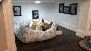 【海外の反応】富豪にならなくても手が届きそうな「犬専用のお部屋」