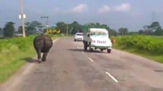 【海外の反応】対向車を威嚇しながら道路を爆走するインドサイ