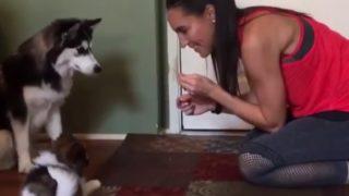 【海外の反応】「ワンダーウーマン」似の美人に調教される犬の迷コンビ