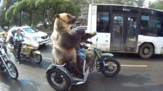 【海外の反応】毎度おなじみ・ロシア製「あり得ないクマ動画」