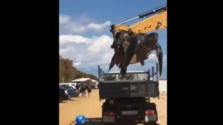 【海外の反応】スペインのビーチで見つかった巨大なカメ