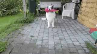 【海外の反応】見たことのないような怪しげなステップで近づいてくる犬