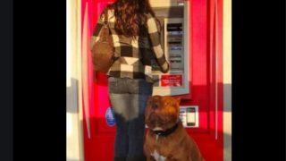 【海外の反応】ATM関連犯罪から飼い主を守る、頼もしい犬たち