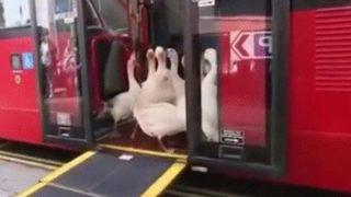 【海外の反応】ロンドン名物2階建てバスから降りてきた「意外な乗客たち」