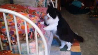 【海外の反応】「奴を眠らせるな!」嫌がらせに執念を燃やす猫