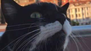 【海外の反応】普通ではない集中力を持つ猫
