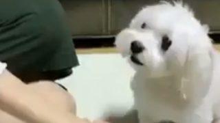 【海外の反応】チームに加わる決断をした「犬の貴族」