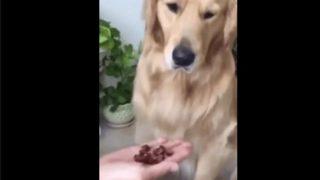【海外の反応】感情が顔に出やすい犬
