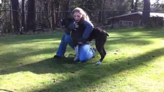 【海外の反応】心臓発作を起こした犬を救う男性