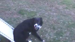 【海外の反応】「落ちてこないボール」に戸惑う最もスマートな犬種