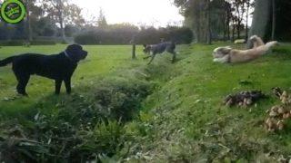 【海外の反応】スポーティーな犬 VS スポーティーじゃない犬