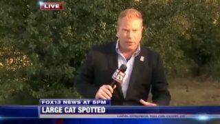 【海外の反応】「大型猫科動物」の目撃現場からライブ中継された意外過ぎる映像