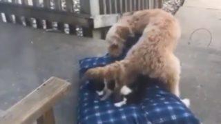 【海外の反応】猫に反旗をひるがえした犬
