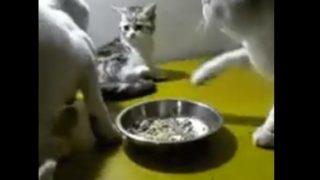 【海外の反応】「さすがにそれはあんまりです…」同情を誘う理不尽極まりない猫パンチ