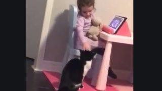 【海外の反応】「のぞき見禁止」お行儀が良い猫