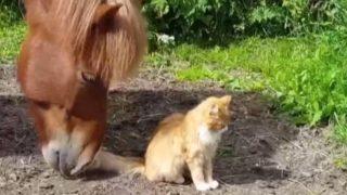 【海外の反応】猫と馬、知られざるお友だち関係