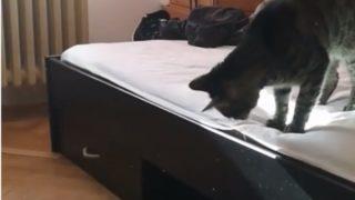 【海外の反応】子ネコがくり出した起死回生の「やけっぱちネコパンチ」