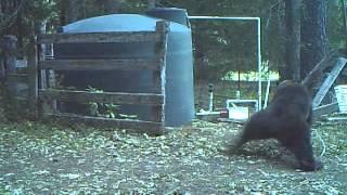 【海外の反応】監視カメラが捉えた、オスにしか分からない痛みに悶絶するクマの恥ずかしい姿