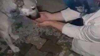 【海外の反応】人の優しさにふれた野良犬が示した、感謝の気持ち…