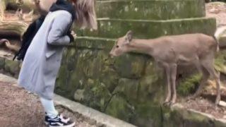【海外の反応】日本の象徴?世界が注目「ナラ・ディアー」