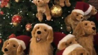 【海外の反応】クリスマス・デコレーションと一体化した犬
