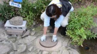 【海外の反応】長野市茶臼山動物園の「きちょうめんなアライグマ」