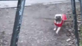 【海外の反応】できる犬とできない犬の違い