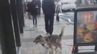 【海外の反応】ハスキーの飼い主が絶対やってはいけないこと