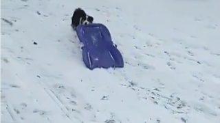 【海外の反応】実はけっこう芸達者だった「独り遊びが好きな犬」