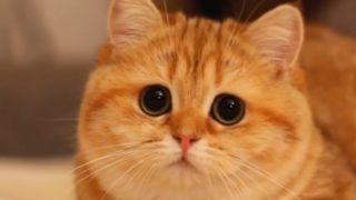 【海外の反応】ディズニー風の目をした猫