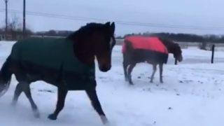 【海外の反応】ロバは見ていた…「雪のなかで大はしゃぎする馬たち」