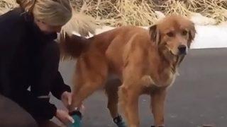【海外の反応】愛情を持って犬に不快な思いをさせる女性?