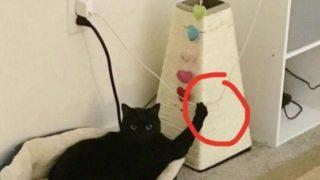 【海外の反応】「こいつをブン投げるよ!」ある方法で飼い主さんを脅迫する猫