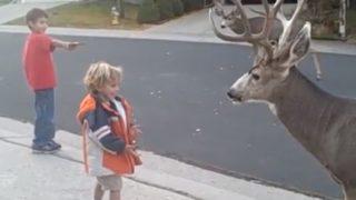 【海外の反応】「大丈夫か?!」野生の雄鹿に手からエサを与える幼い兄弟